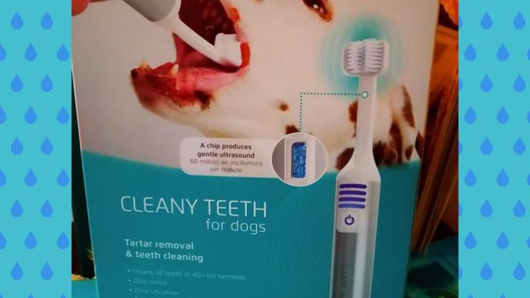Cleaning teeth service for dogs west sussex cleany teeth